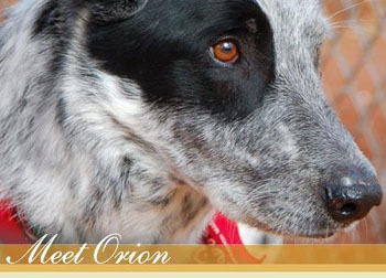 Meet Orion Dog